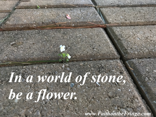 In a world of stone, be a flower.